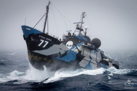 Credit Sea Shepherd