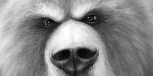 grumpy-bear-600x300